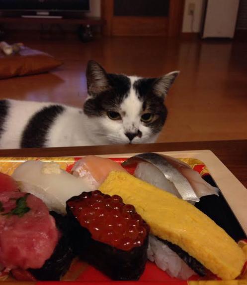 20131207_sushi.jpg
