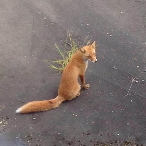 20150912_fox2.jpg
